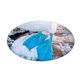 Feet of a blue-footed booby - Oval Car Magnet