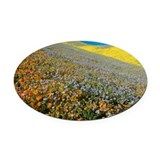 Wildflowers, California - Oval Car Magnet