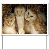 Young barn owls - Yard Sign