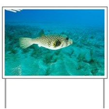 White-spotted pufferfish - Yard Sign