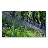 Bluebell wood - Decal