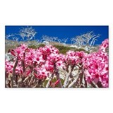 Desert rose flowers - Decal