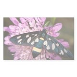 Nine-spotted moth - Decal