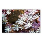 Soft coral - Decal