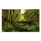 Temperate rainforest - Decal