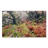 Wistman's Wood, Dartmoor - Decal