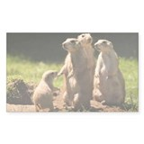 Black-tailed prairie dogs - Decal