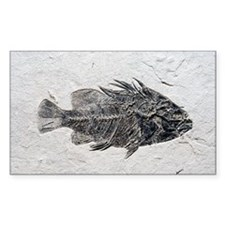 Priscacara fish fossil - Decal