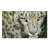 Snow leopard - Decal