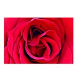 Red Rosa OKeefe Postcards (Package of 8)