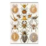 Haeckel Spiders Postcards (Package of 8)