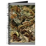 Haeckel Lizards Journal