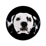 "Dalmatian Face 3.5"" Button"