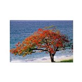 Flamboyant tree - Rectangle Magnet