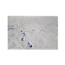 Footprints in snow - Rectangle Magnet