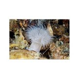 Sea anemone - Rectangle Magnet