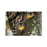 Three-striped owl monkeys - Rectangle Magnet