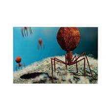 Bacteriophage viruses - Rectangle Magnet