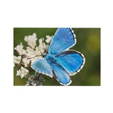 Adonis blue butterfly - Rectangle Magnet