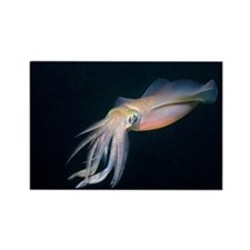 Bigfin reef squid - Rectangle Magnet