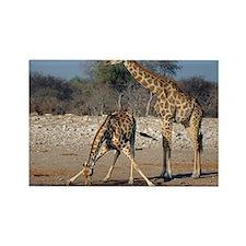 Giraffes - Rectangle Magnet