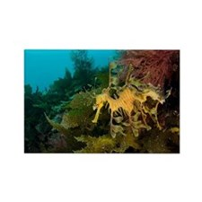 Leafy sea dragon - Rectangle Magnet