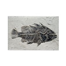 Priscacara fish fossil - Rectangle Magnet