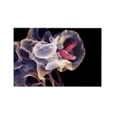 bacteria, SEM - Rectangle Magnet (10 pk)