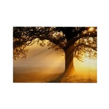 Oak tree at sunrise - Rectangle Magnet (10 pk)