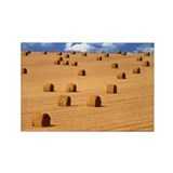 Bales of straw - Rectangle Magnet (10 pk)