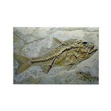 Fish fossil - Rectangle Magnet (10 pk)