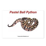 Python Postcards (Package of 8)