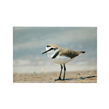 Kentish plover - Rectangle Magnet (10 pk)