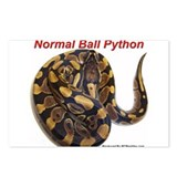 Unique Python Postcards (Package of 8)