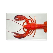 Atlantic lobster - Rectangle Magnet (100 pk)