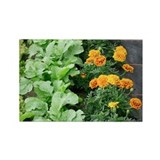 Companion planting - Rectangle Magnet (100 pk)