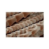 SEM of bat hair - Rectangle Magnet (100 pk)