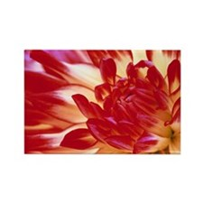 Dahlia flower - Rectangle Magnet (100 pk)