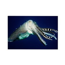 Broadclub cuttlefish - Rectangle Magnet (100 pk)