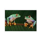 Red-eyed tree frogs - Rectangle Magnet (100 pk)