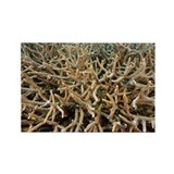 Staghorn coral - Rectangle Magnet (100 pk)