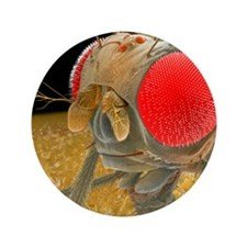 Fruit fly, SEM - 3.5