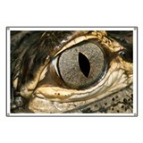 American alligator eye - Banner