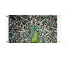 Peacock - Banner