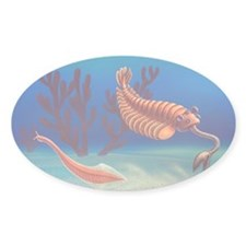 Cambrian animals, artwork - Decal