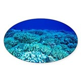 Coral reef - Decal