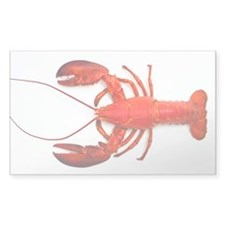 Atlantic lobster - Decal