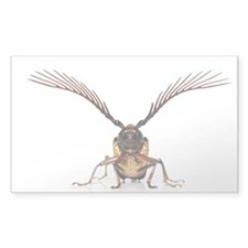 Longhorn beetle - Decal