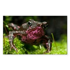 Poisonous toad - Decal