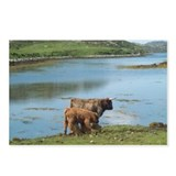 Highland Cattle Postcards (Package of 8)